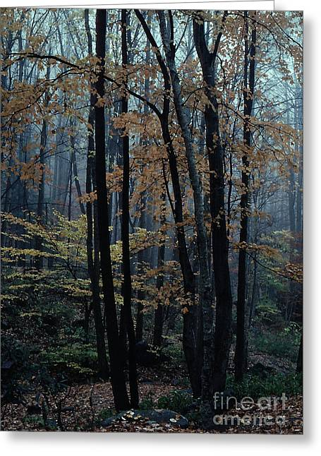 Autumn In The Forest Greeting Card by Adeline Byford