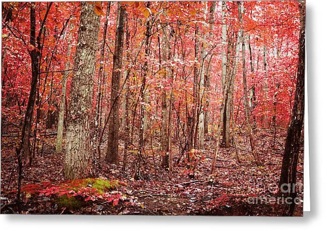 Autumn Landscape Greeting Card by Kim Fearheiley