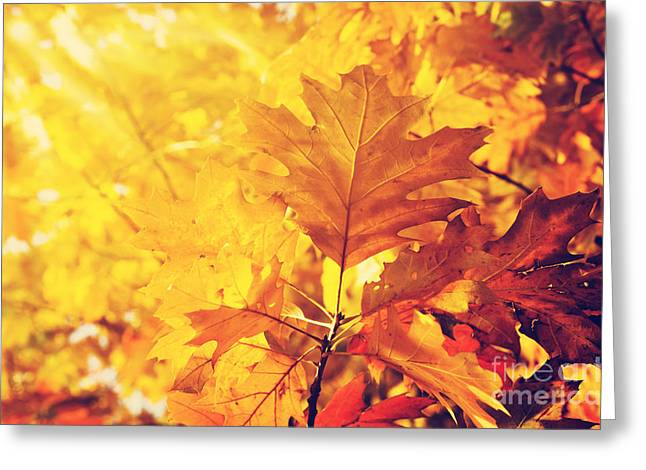Autumn Leaves Greeting Card by Jelena Jovanovic