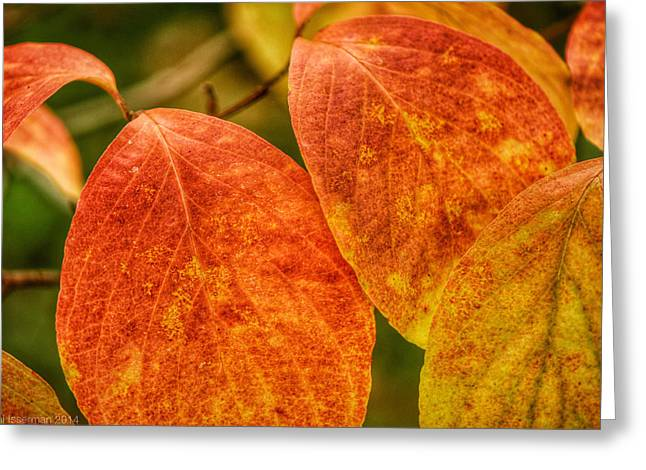 Autumn Leaves Greeting Card by Kathi Isserman