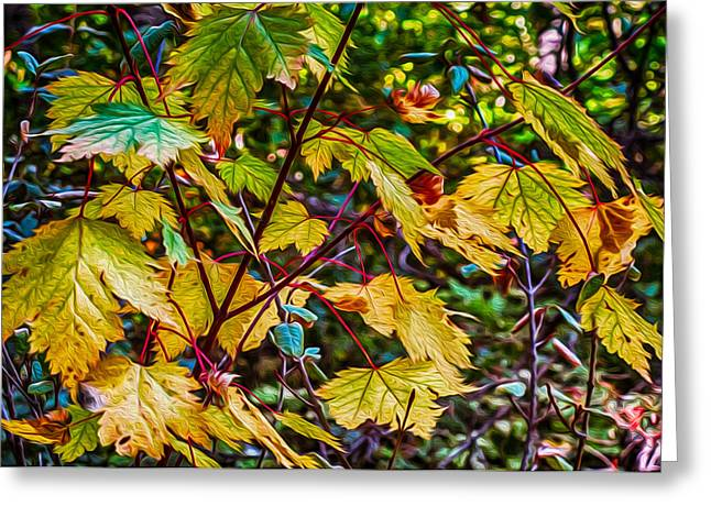 Autumn Leaves Greeting Card by Omaste Witkowski