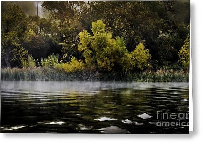 Autumn Mist Greeting Card by Mitch Shindelbower