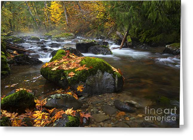 Autumn Stream Greeting Card by Mike Dawson