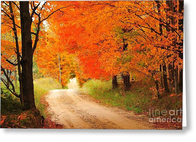 Greeting Card featuring the photograph Autumn Trail by Terri Gostola