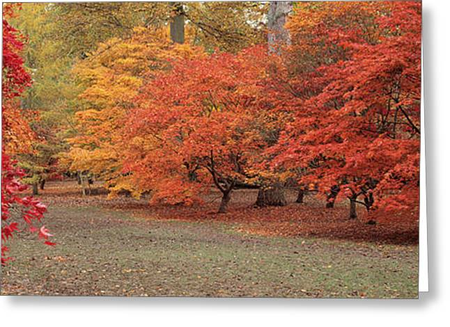 Autumn Trees In Westonbirt Arboretum Greeting Card by Panoramic Images