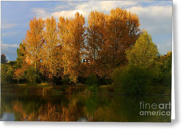 Greeting Card featuring the photograph Autumn Trees by Jeremy Hayden