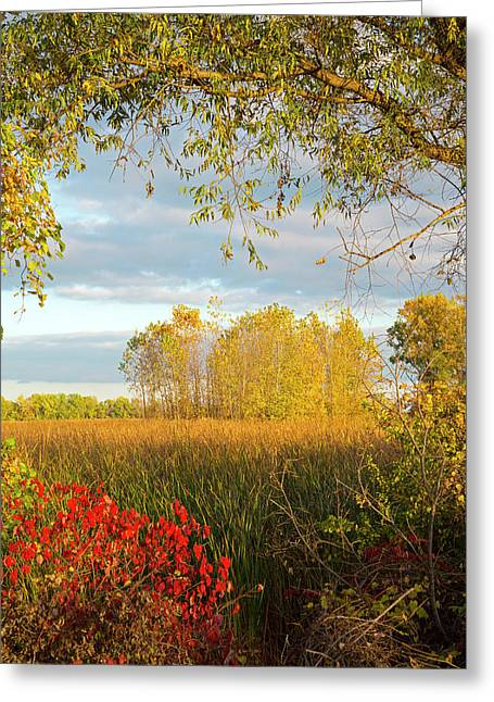 Autumn Trees Greeting Card by Jim West