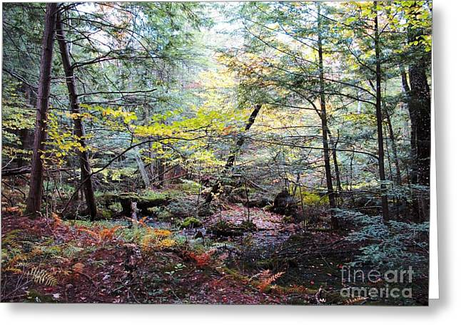 Autumn Woods Greeting Card by Linda Marcille