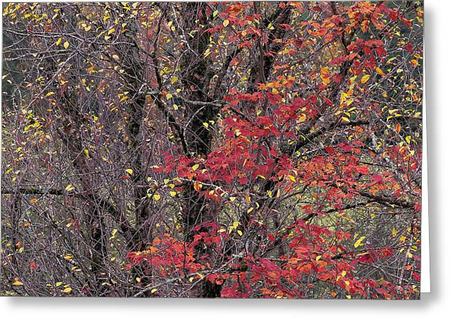 Greeting Card featuring the photograph Autumn's Palette by Alan L Graham
