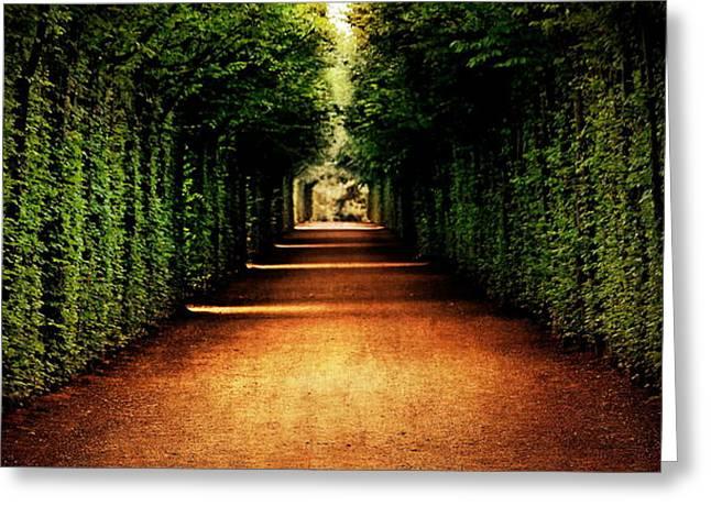 Avenue Trees Greeting Card