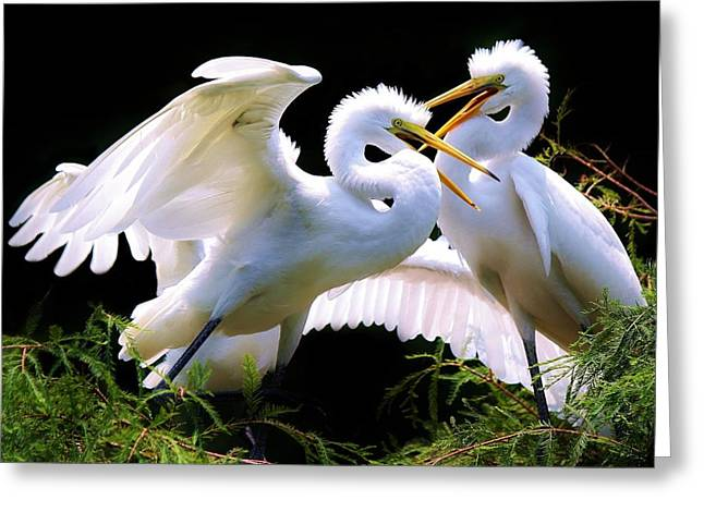 Baby Egrets In The Nest Greeting Card by Paulette Thomas