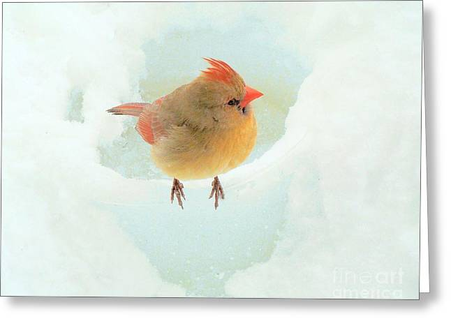 Baby Female Cardinal Greeting Card