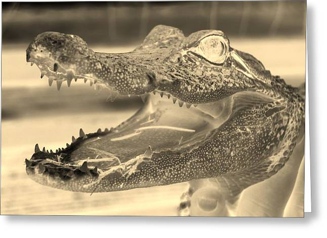 Baby Gator Neg Dark Sepia Greeting Card by Rob Hans