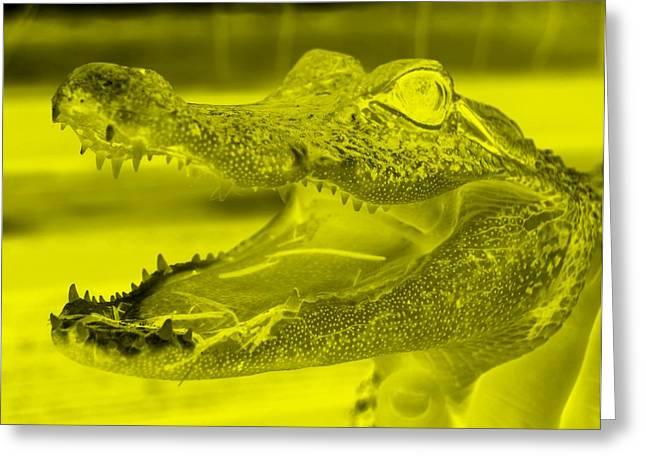 Baby Gator Neg Yellow Greeting Card by Rob Hans