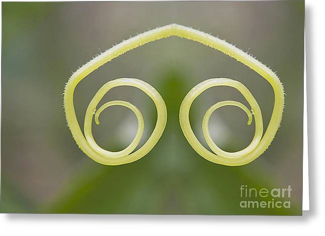 Background With Cucumber Tendril Eye Greeting Card by Odon Czintos