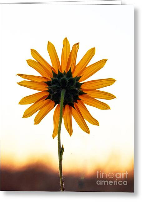 Backside Greeting Card by Robert Bales