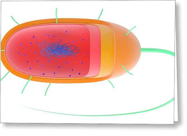 Bacterial Cell Greeting Card by Science Photo Library