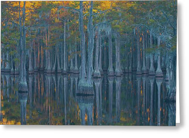 Bald Cypress Trees In A Forest, George Greeting Card by Panoramic Images