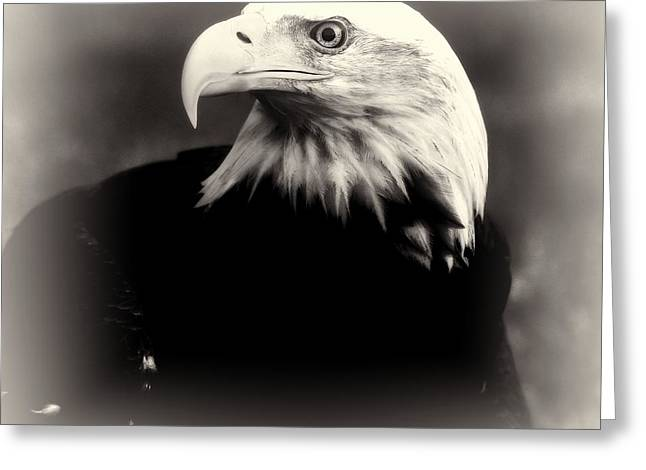 Bald Eagle Black And White Greeting Card by Dan Sproul