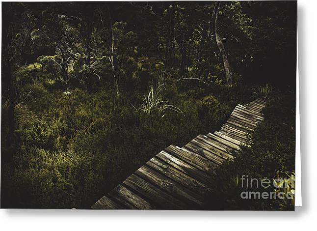 Ballroom Forest On The Dove Lake Walking Track Greeting Card by Jorgo Photography - Wall Art Gallery