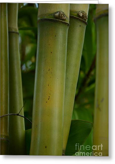 Greeting Card featuring the photograph Bamboo II by Robert Meanor