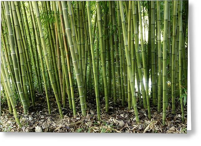 Bamboo Greeting Card by Les Cunliffe
