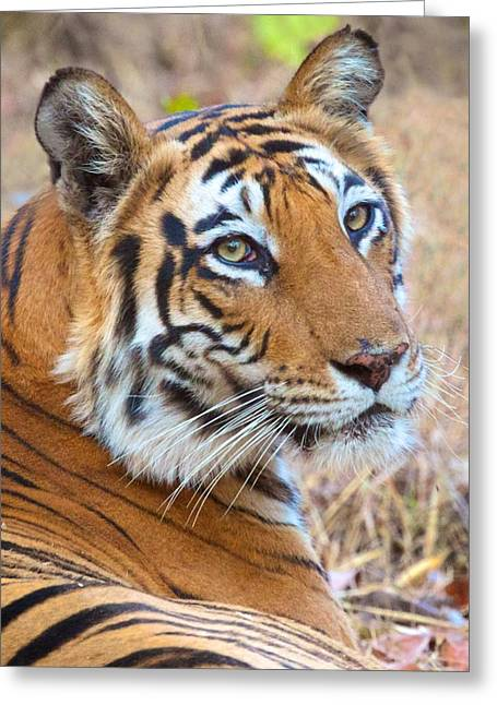 Bandhavgarh Tigeress Greeting Card