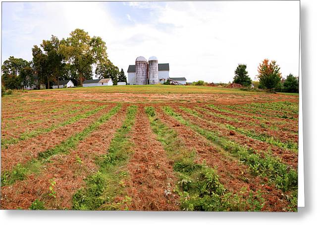 Barn And Silo In A Field, Route 34 Greeting Card by Panoramic Images
