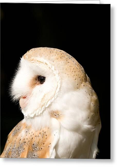 Barn Owl - Tyto Alba Greeting Card by Paul Lilley