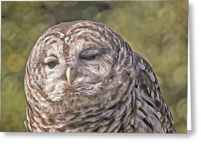 Greeting Card featuring the photograph Barred Hoot Owl Photo Art by Constantine Gregory