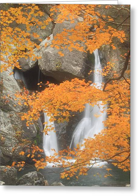 Bash Bish Falls In Autumn Greeting Card