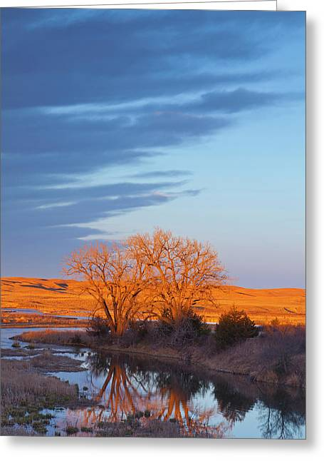Bathed In Sunset Light The Calamus Greeting Card