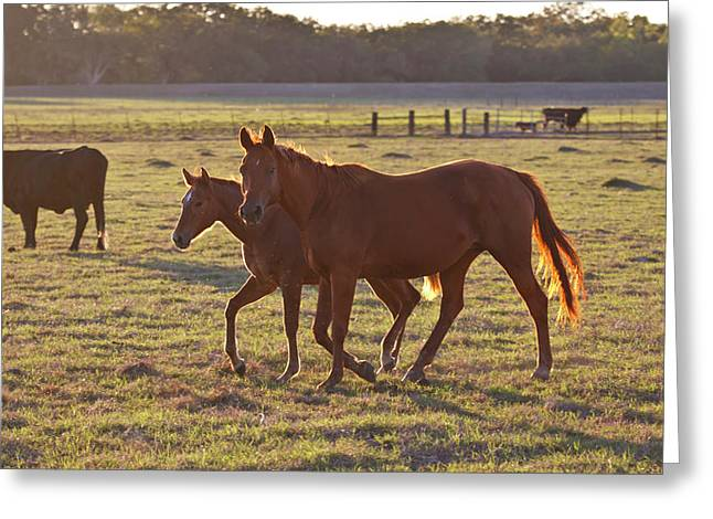 Bay-colored Riding Horses On Ranch Greeting Card by Larry Ditto