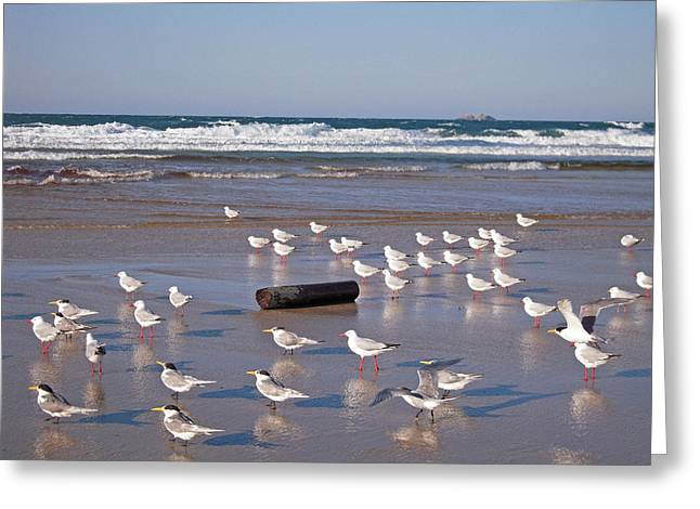 Greeting Card featuring the photograph Beach Birds by Ankya Klay