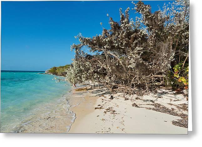 Beach Greeting Card by Hank Shiffman