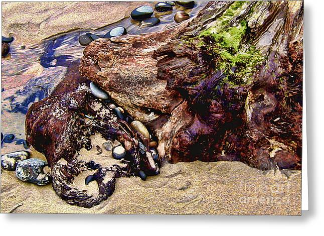 Beach Stump And Stones Greeting Card by Joseph Vittek