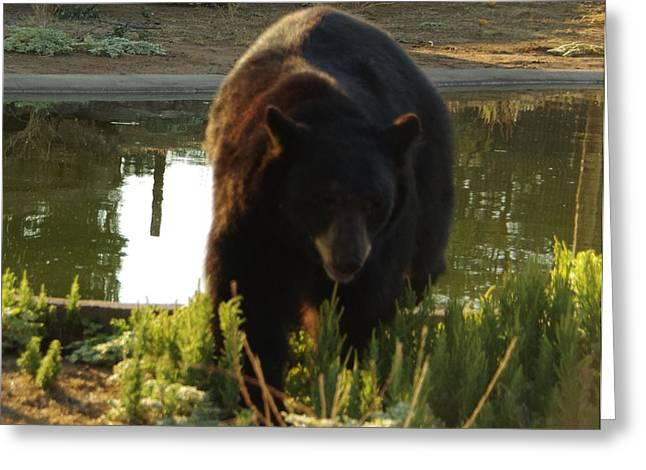 Bear 1 Greeting Card