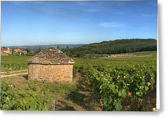 Beaujolais Vineyard, Saules Greeting Card by Panoramic Images