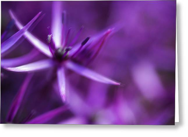Beautiful Purple Floral Abstract Greeting Card by Matthew Gibson