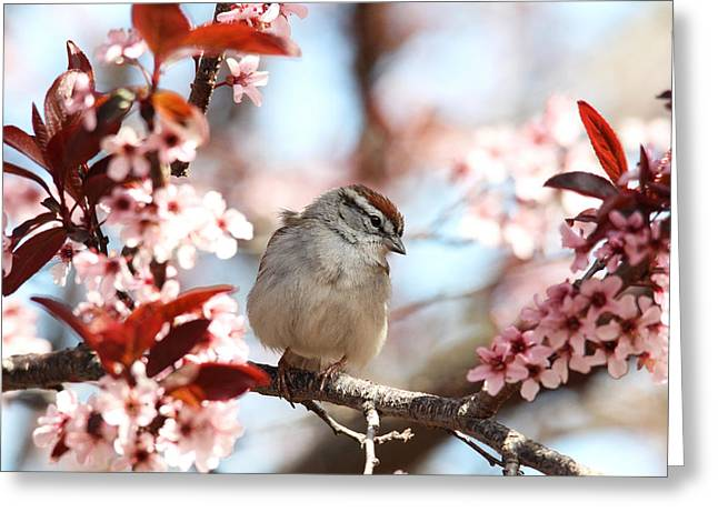 Beautiful Sparrow Greeting Card by Trina  Ansel