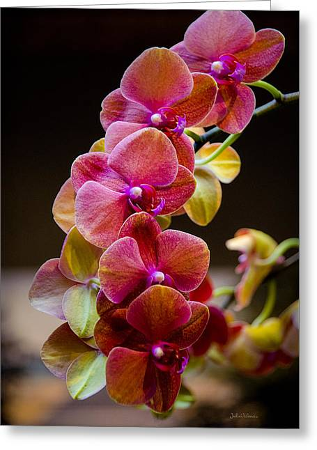 Beauty Of Orchids  Greeting Card by Julie Palencia