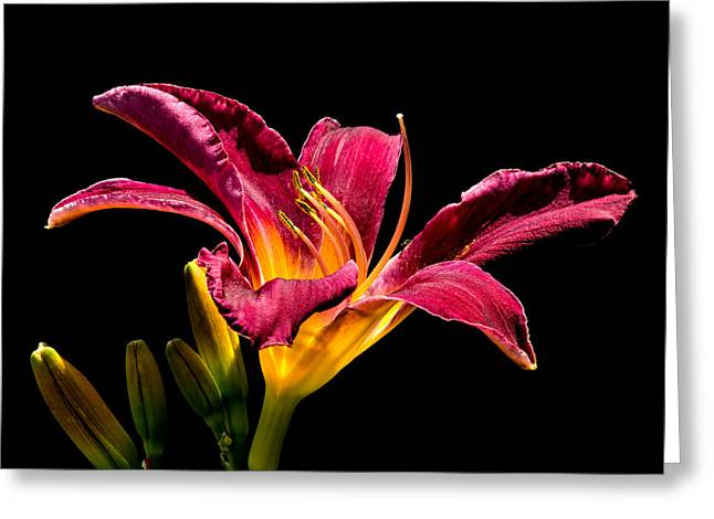 Beauty On The Black #5 Greeting Card