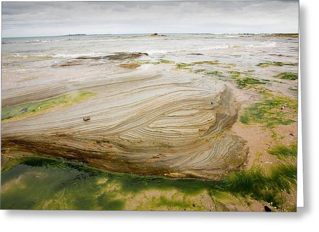 Bedding Planes In Sandstone Greeting Card by Ashley Cooper