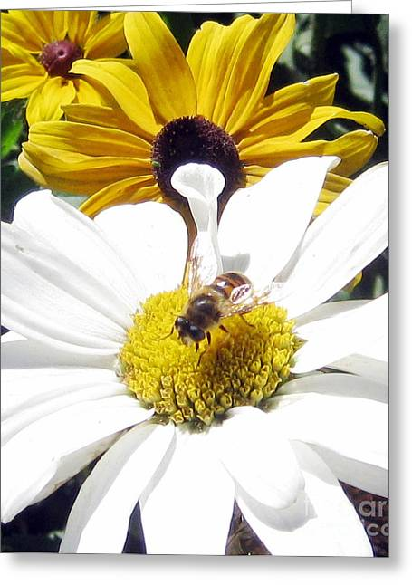 Greeting Card featuring the photograph Beecause by Janice Westerberg
