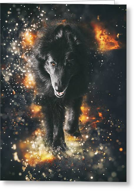 Belgian Sheepdog Art Greeting Card by Wolf Shadow  Photography