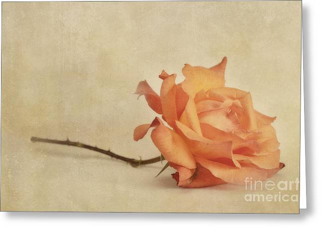 Bellezza Greeting Card by Priska Wettstein