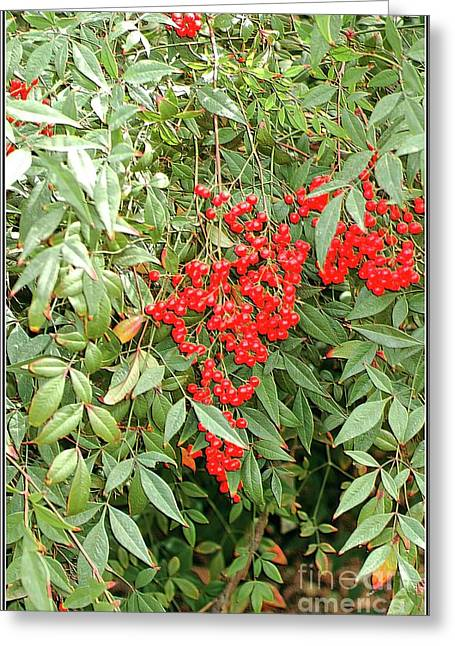 Berry Bush Greeting Card by Kathleen Struckle
