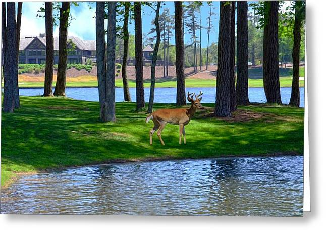 Big Canoe Buck Greeting Card by Bob Jackson