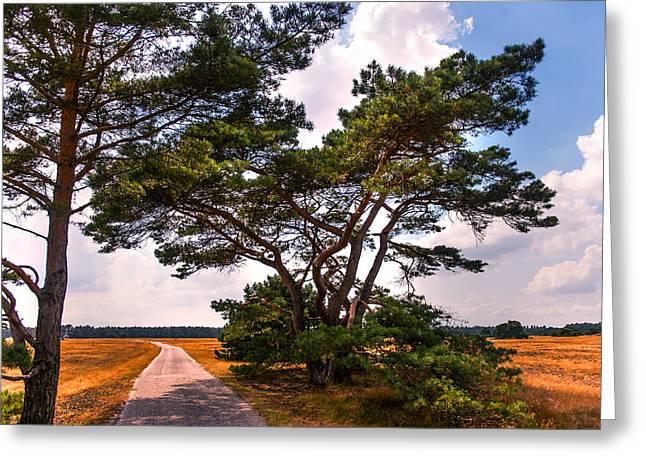 Bike Track In Hoge Veluwe National Park. Netherlands Greeting Card by Jenny Rainbow