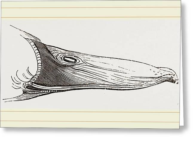 Bill Of Mallard Greeting Card by Litz Collection